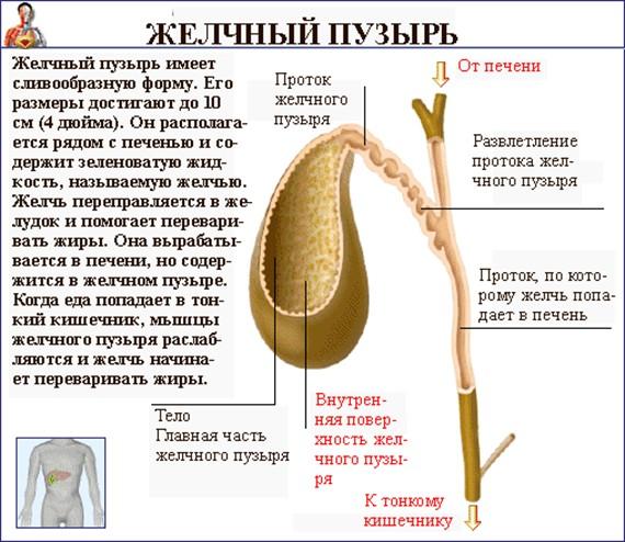 народное средство от паразитов в кишечнике человека