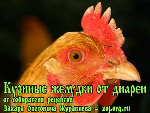 Лечение длительной диареи куриными желудками