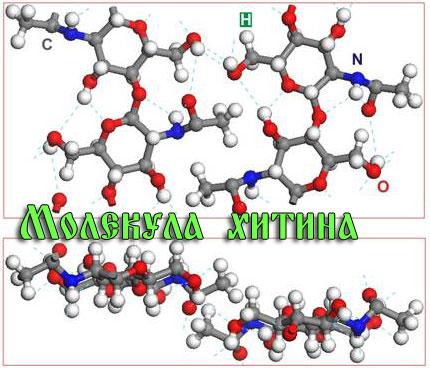 Молекула хитина 2