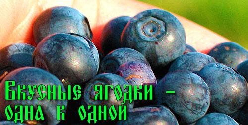 Вкусные ягоды черники