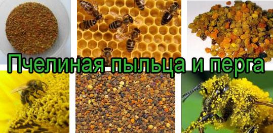 Пчелиная пыльца и перга